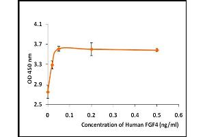 Image no. 2 for Fibroblast Growth Factor 4 (FGF4) (Active) protein (ABIN5509808)