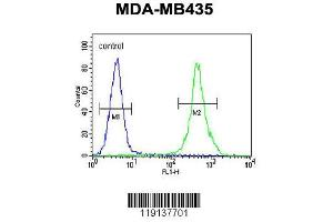 Flow Cytometry (FACS) image for anti-Zinc Finger E-Box Binding Homeobox 2 (ZEB2) (AA 1078-1105), (C-Term) antibody (ABIN656023)