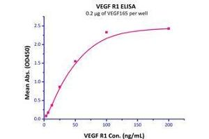 Image no. 2 for Vascular Endothelial Growth Factor (VEGF) (AA 27-191) (Active) protein (ABIN2181903)