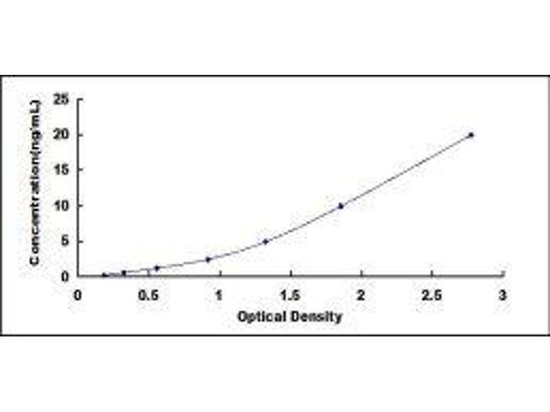 Calcium Channel, Voltage-Dependent, R Type, alpha 1E Subunit (CACNA1E) ELISA Kit