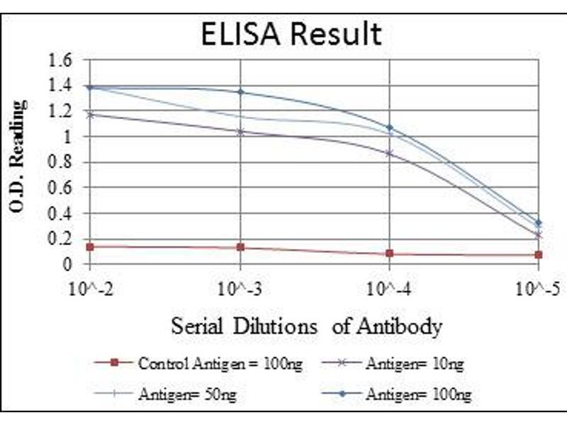 ELISA image for anti-Caspase 8 antibody (Caspase 8, Apoptosis-Related Cysteine Peptidase) (ABIN1105678)