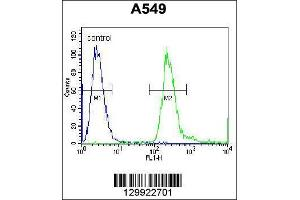 Image no. 4 for anti-Poly(A) Binding Protein, Nuclear 1-Like (Cytoplasmic) (PABPN1L) (AA 166-194), (Center) antibody (ABIN655857)