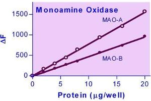 Image no. 1 for Monoamine Oxidase Assay Kit (ABIN1000321)