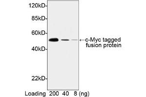 image for anti-Myc Tag antibody (HRP) (ABIN2585196)