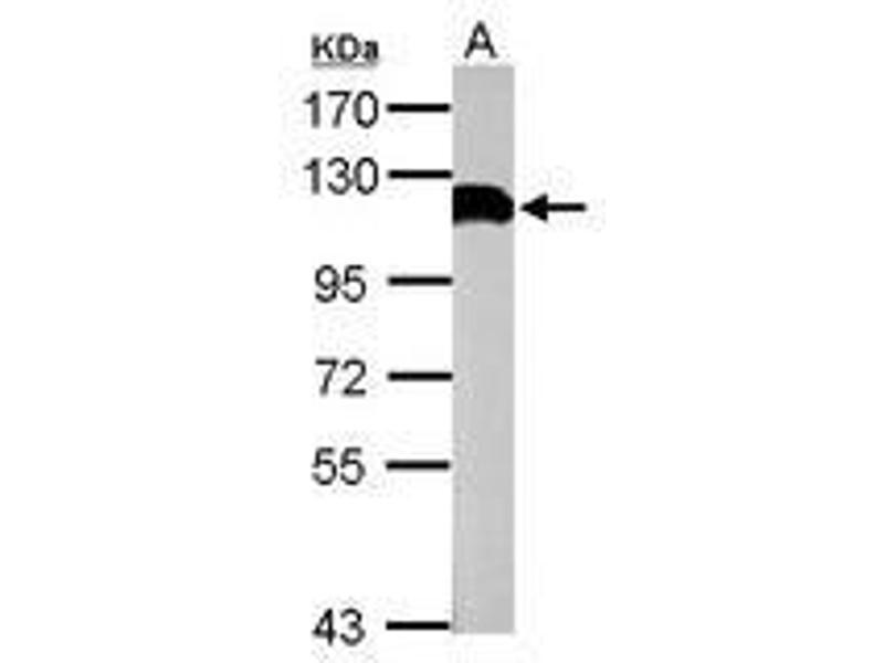 电路 电路图 电子 原理图 810_610