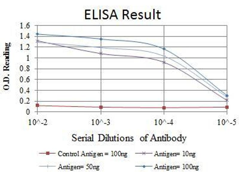 ELISA image for anti-Nuclear Factor of kappa Light Polypeptide Gene Enhancer in B-Cells 1 (NFKB1) antibody (ABIN969312)