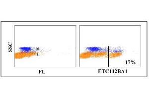 Flow Cytometry (FACS) image for anti-CD8a Molecule (CD8A) antibody (ABIN5604420)