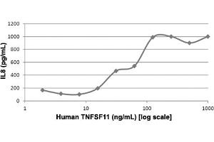 Image no. 1 for Tumor Necrosis Factor (Ligand) Superfamily, Member 11 (TNFSF11) protein (ABIN5570886)