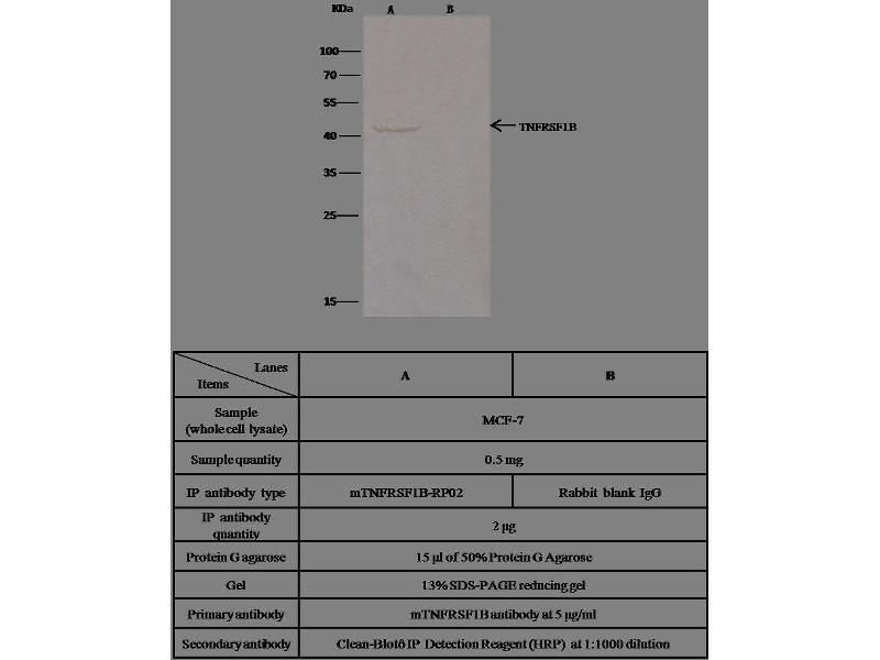 Immunoprecipitation (IP) image for anti-Tumor Necrosis Factor Receptor Superfamily, Member 1B (TNFRSF1B) (AA 1-258) antibody (ABIN2000411)