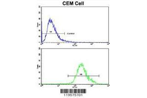 Image no. 2 for anti-CCR4-NOT Transcription Complex, Subunit 8 (CNOT8) (AA 227-255), (C-Term) antibody (ABIN390421)