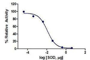 Image no. 1 for Superoxide Dismutase 1, Soluble (SOD1) (Active) protein (ABIN413796)
