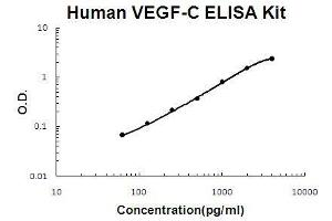 Image no. 1 for Vascular Endothelial Growth Factor C (VEGFC) ELISA Kit (ABIN411382)