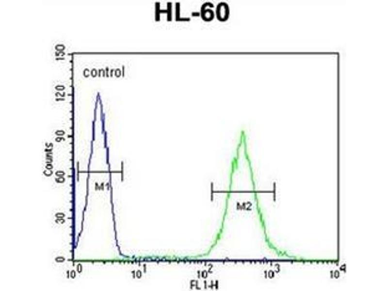 Flow Cytometry (FACS) image for anti-Guanine Deaminase (GDA) (AA 101-130), (N-Term) antibody (ABIN952661)
