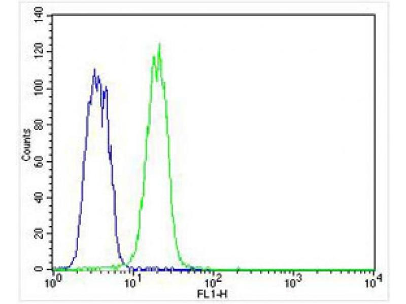 image for anti-Keratin 12 (KRT12) (AA 442-471), (C-Term) antibody (ABIN5533216)