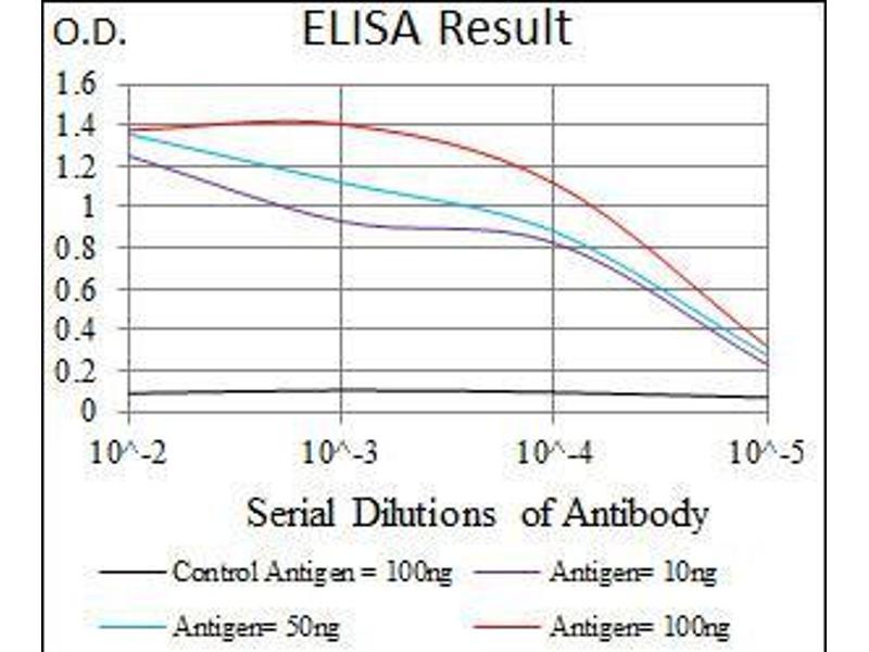 ELISA image for anti-VAV1 antibody (Vav 1 Oncogene) (AA 121-324) (ABIN969581)