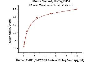 Image no. 1 for Poliovirus Receptor-Related 4 (PVRL4) (AA 31-347) (Active) protein (His tag) (ABIN6938822)