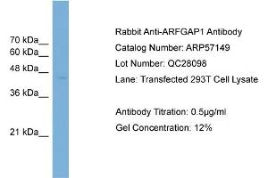Western Blotting (WB) image for anti-ADP-Ribosylation Factor GTPase Activating Protein 1 (ARFGAP1) (Middle Region) antibody (ABIN2787084)