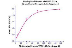 Image no. 3 for Vascular Endothelial Growth Factor (VEGF) (AA 27-191) (Active) protein (Biotin) (ABIN2181906)
