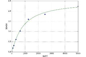 Image no. 1 for Cytochrome P450, Family 3, Subfamily A, Polypeptide 4 (CYP3A4) ELISA Kit (ABIN5523140)