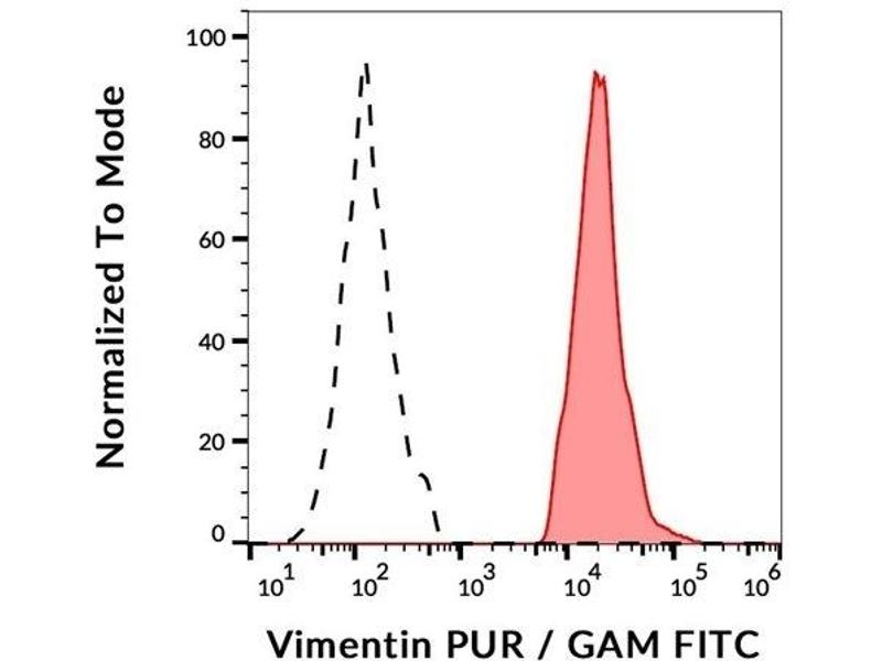 Image no. 1 for anti-Vimentin (VIM) antibody (ABIN94494)