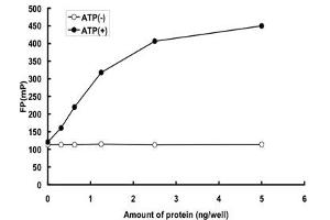 Image no. 1 for Protein Kinase, CGMP-Dependent, Type I (PRKG1) (AA 1-686) protein (GST tag) (ABIN5570613)
