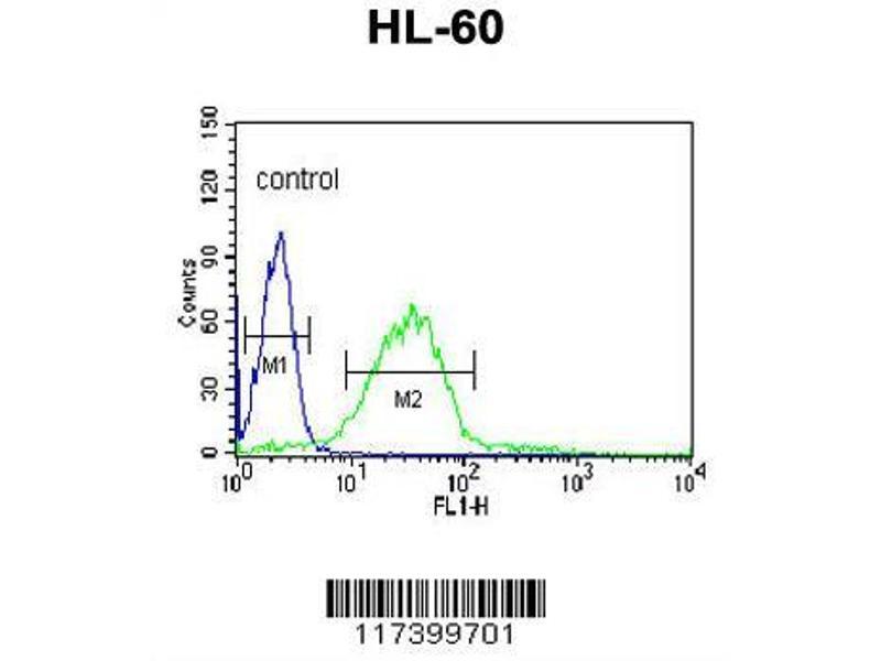 Flow Cytometry (FACS) image for anti-LIPE antibody (Lipase, Hormone-Sensitive) (AA 822-849) (ABIN653323)