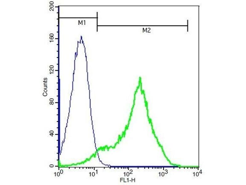 Flow Cytometry (FACS) image for anti-FZD10 antibody (Frizzled Family Receptor 10) (AA 100-150) (ABIN1714166)