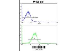 Image no. 2 for anti-Clusterin Associated Protein 1 (CLUAP1) (AA 379-408), (C-Term) antibody (ABIN5530839)