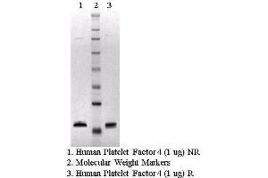 Image no. 1 for Platelet Factor 4 (PF4) protein (ABIN491555)