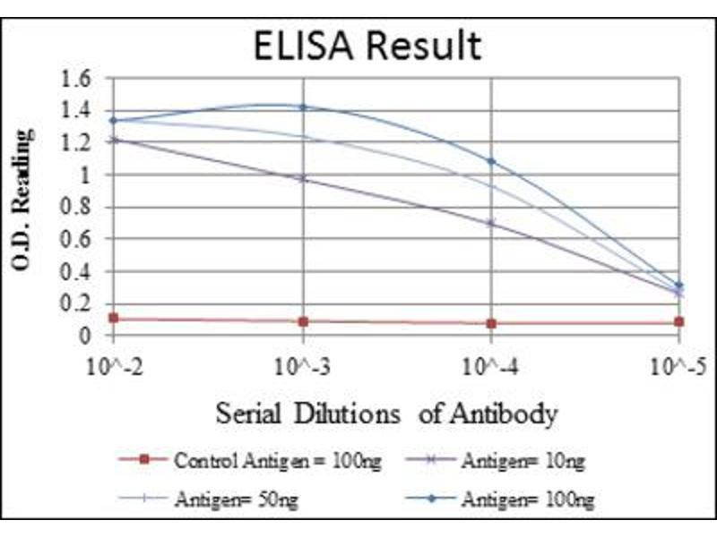 ELISA image for anti-Actin, alpha 2, Smooth Muscle, Aorta (ACTA2) antibody (ABIN1845399)