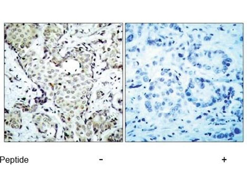 image for anti-MAP2K6 antibody (Mitogen-Activated Protein Kinase Kinase 6) (AA 205-209) (ABIN197354)