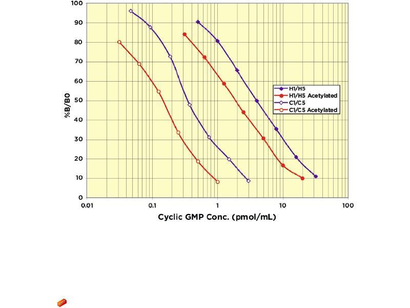 image for Cyclic GMP (cGMP) ELISA Kit (ABIN577672)