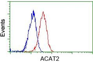 Image no. 6 for anti-Acetyl-CoA Acetyltransferase 2 (ACAT2) antibody (ABIN1496398)