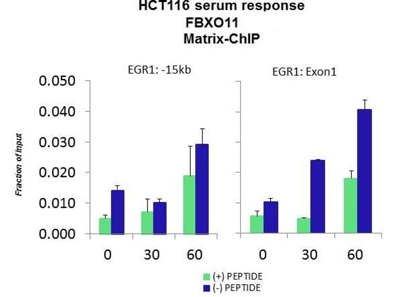 Chromatin Immunoprecipitation (ChIP) image for anti-F-Box Protein 11 (FBXO11) (Middle Region) antibody (ABIN2774788)