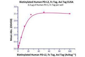 Image no. 1 for Programmed Cell Death 1 Ligand 2 (PDCD1LG2) (AA 20-219) (Active) protein (Fc Tag,AVI tag,Biotin) (ABIN2870562)