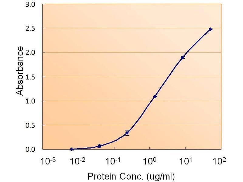 image for anti-Calnexin (CANX) (Internal Region) antibody (ABIN2561540)