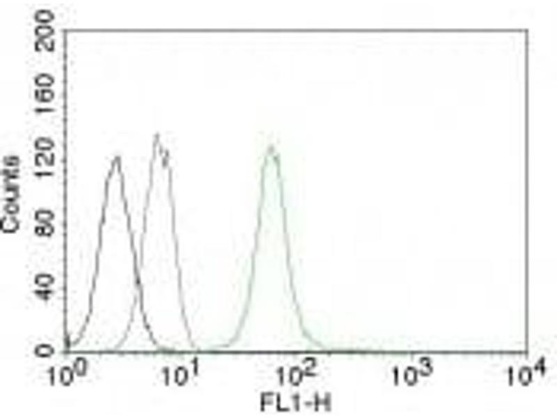 image for anti-Vimentin (VIM) antibody (APC) (ABIN6166931)