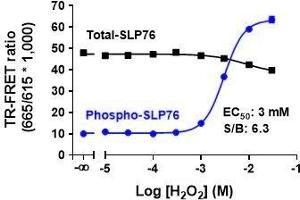Image no. 1 for Phospho-SLP76 (S376) and Total-SLP76 TR-FRET Cellular Assay Kit (ABIN6938999)