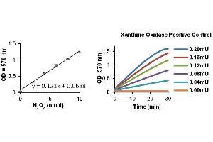 Image no. 1 for Xanthine Oxidase Activity Colorimetric/Fluorometric Assay Kit (ABIN411904)