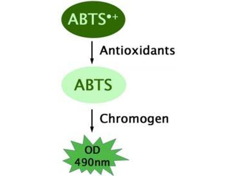 Image no. 2 for OxiSelect™ Trolox Equivalent Antioxidant Capacity (TEAC) Assay Kit (ABTS) (ABIN5067625)