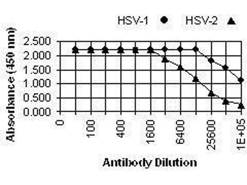 Herpes Simplex Virus gB (HSV gB) antibody (ABIN265573)