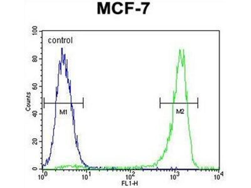 Flow Cytometry (FACS) image for anti-Vascular Endothelial Growth Factor C (VEGFC) (AA 27-57), (N-Term) antibody (ABIN955510)