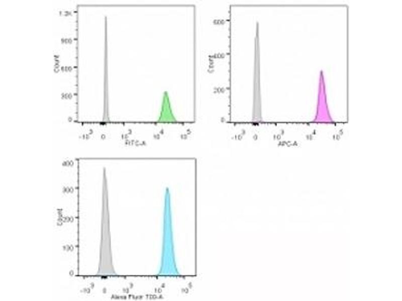 anti-Nucleolin antibody | Product No  ABIN3025709