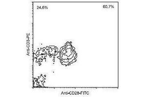 Flow Cytometry (FACS) image for anti-CD28 antibody (CD28)  (Biotin) (ABIN440251)