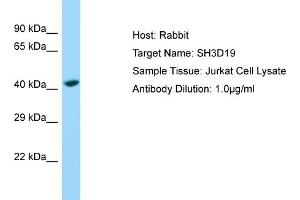Image no. 1 for anti-SH3 Domain Containing 19 (SH3D19) (C-Term) antibody (ABIN2790699)