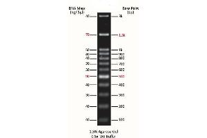Image no. 1 for ExcelBand™ 100 bp+3K DNA Ladder (ABIN5662595)