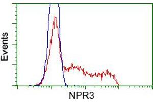 Image no. 2 for anti-Atrial Natriuretic Peptide Receptor 3 (NPR3) antibody (ABIN1499807)