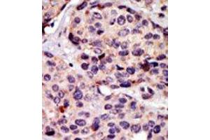 Image no. 2 for anti-Atrial Natriuretic Peptide Receptor 3 (NPR3) (N-Term) antibody (ABIN360591)