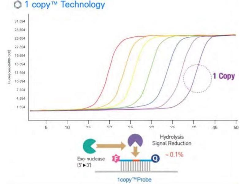 Image no. 3 for 1copy™ COVID-19 qPCR Kit (ABIN6952539)