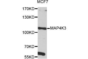 Image no. 1 for anti-Mitogen-Activated Protein Kinase Kinase Kinase Kinase 3 (MAP4K3) antibody (ABIN1875811)